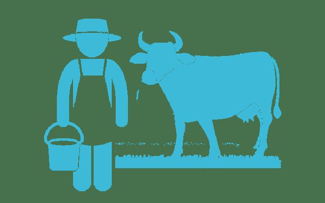 Bauer mit Kuh zur Visualisierung des Mythos, dass eine Kuh jederzeit Milch gibt und gemolken werden muss