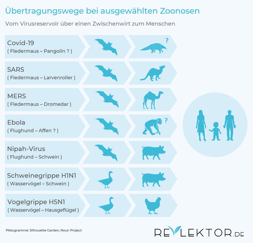 Infografik, die zeigt, dass die Übertragung zum Menschen bei Krankheiten aus dem Tierreich häufig über einen Zwischenwirt verläuft
