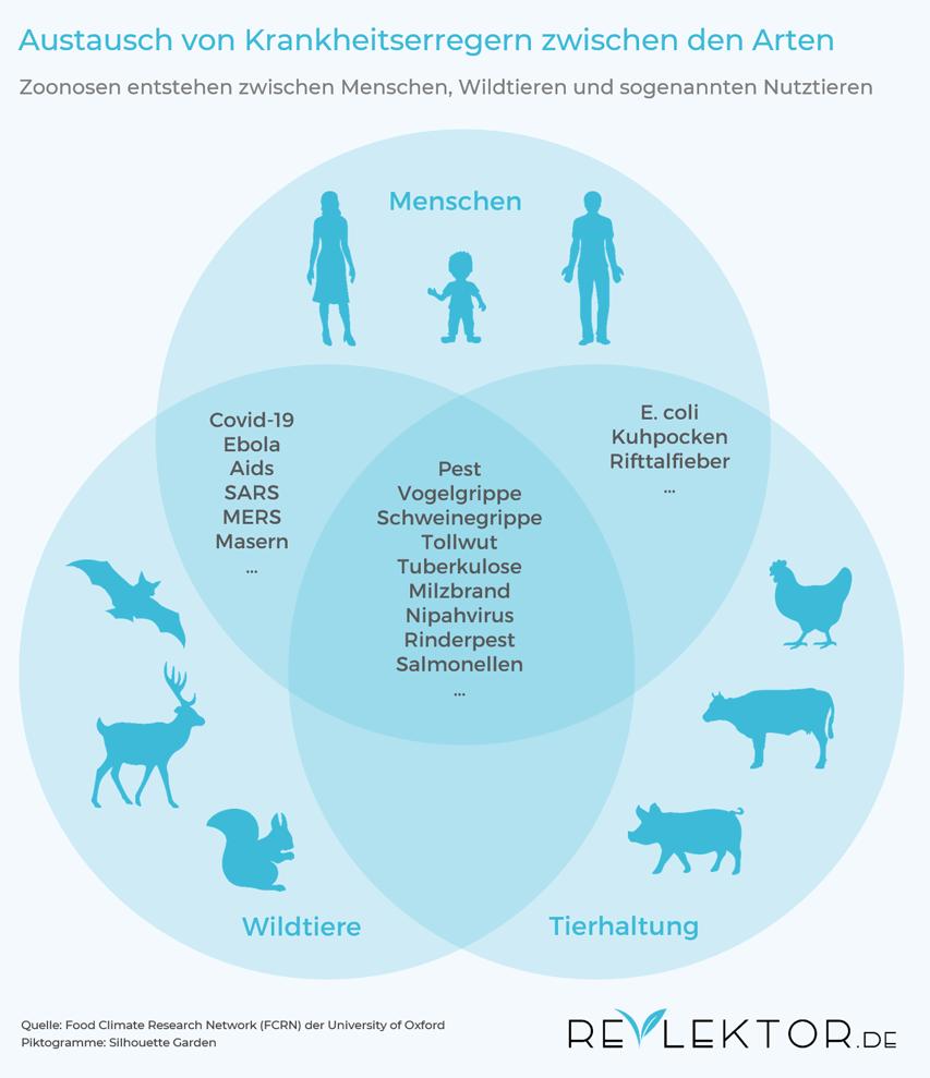 Infografik, die zeigt, dass Krankheiten aus dem Tierreich sowohl von Wildtieren als auch von Nutztieren stammen