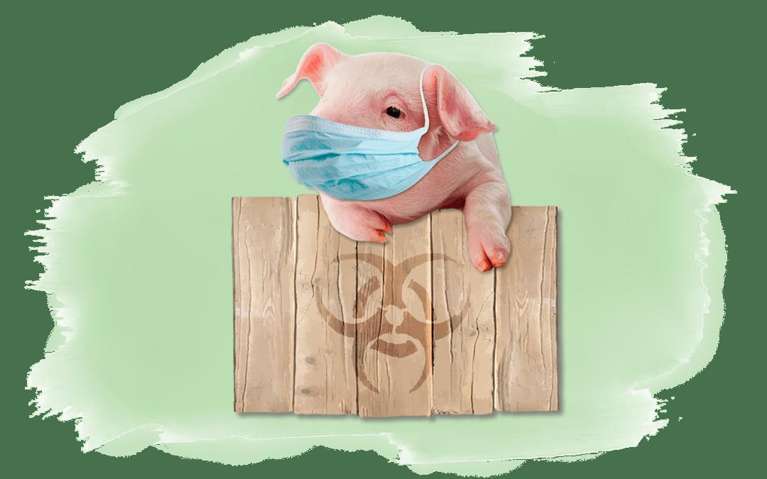 Schwein mit Maske als Titelbild für Artikel über Zoonosen