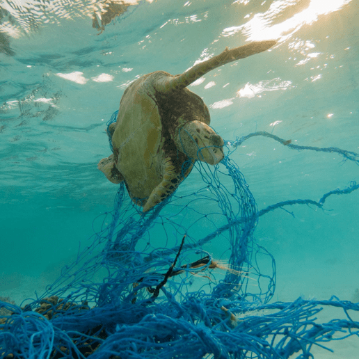 Zurückgelassene Fischernetze sind die größte Quelle für Plastikmüll in den Ozeanen