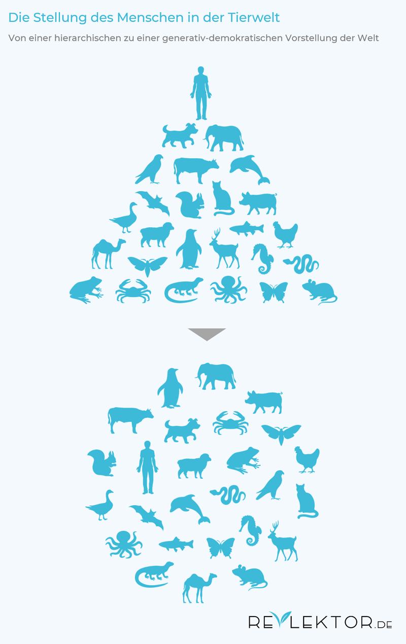 Infografik, die den Menschen in der Tierwelt zeigt: einmal hierarchisch an der Spitze der Evolutionspyramide und einmal gleichberechtigt inmitten der anderen Tiere