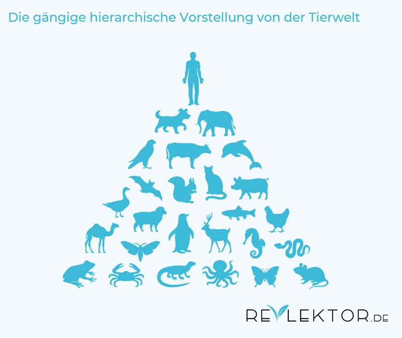Infografik, die den Menschen an der Spitze der Evolutionspyramide unter vielen anderen Tieren zeigt