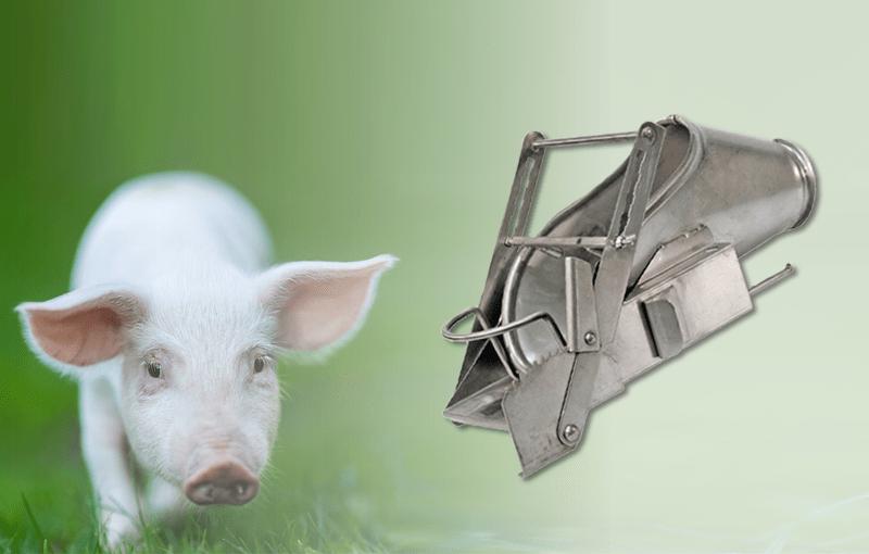 Werkzeug aus der Tierhaltung: Kastrationsbank in der Schweinehaltung
