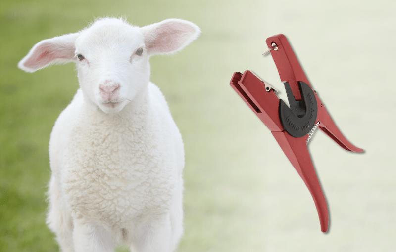 Ohrmarkenzange zur Kennzeichnung von Nutztieren
