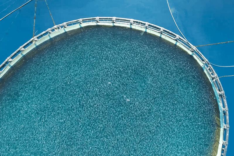 Ein Netzgehege im Wasser aus der Lachzucht in Aquakulturen