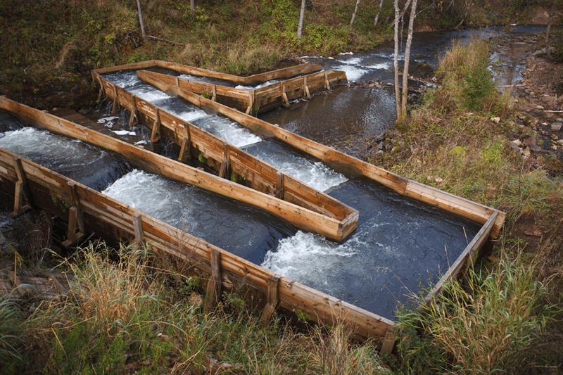 Eine Lachstreppe in einem Fluss