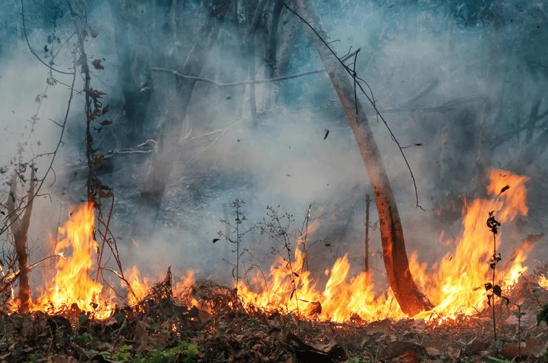 Brennende Tropenwälder als Argument für den Veganismus