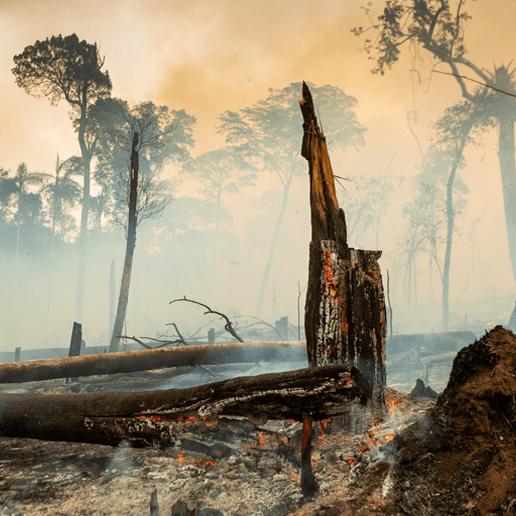 Das Amazonasgebiet kippt von der CO₂-Senke zur CO₂-Schleuder